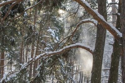 Такса Бася на прогулке в зимнем лесу