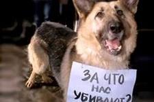 В защиту бездомных животных