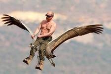 В.В. Путин – в заботах о животных