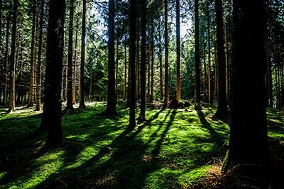 Не тропинки, а заборы в лесу?!