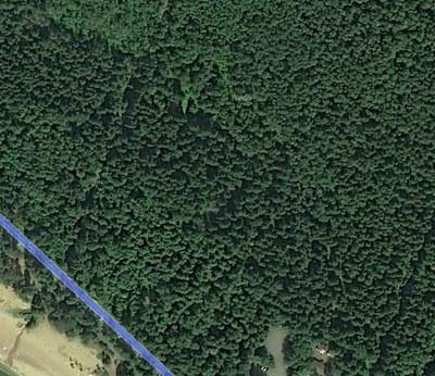 Комарово: апарт-отель  на месте леса?