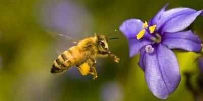 Угроза миру – остаться без пчел