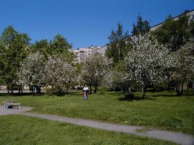 Яблоневый сад в городской черте? Срубить.