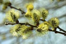 А. Марасов. Этюды к описанию природы. Весна