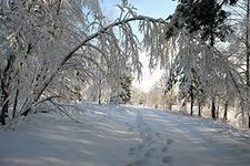 А. Марасов. Этюды к описанию природы. Зима