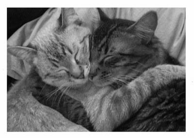 «Люди заводят собак, а кошки - людей. Видно, считают их полезными домашними животными…»