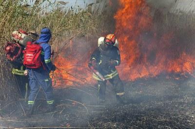 Пожары в плавнях: кто их устраивает, кто их тушит и кто чинит огнеборцам препятствия