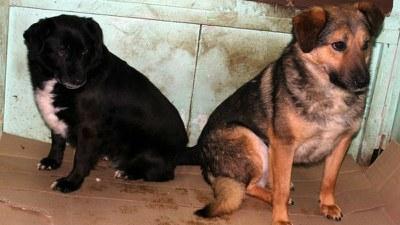 Спасенные собаки г. Североморска