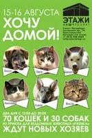 """Выставка-раздача бездомных животных """"Хочу домой"""" 15 и 16 августа"""