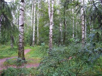 """ЭКОМ и """"Зеленая волна"""" против вырубки городских лесов"""