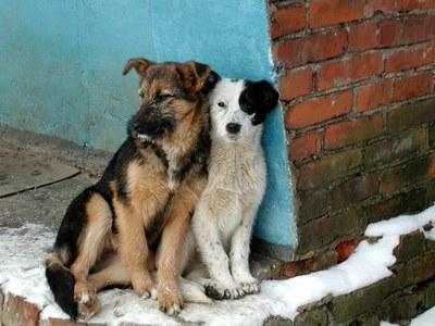 Зоозащитники выступают против убийства безнадзорных животных