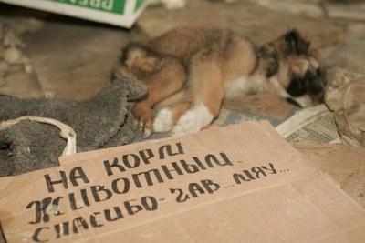 """Акция защитников животных против """"коробочников"""""""