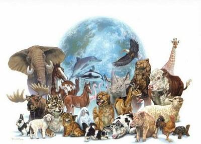 Правозащитный Совет Санкт-Петербурга вступился за права животных