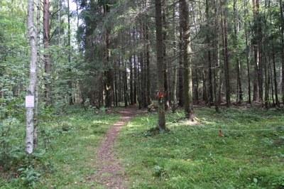 К разработке концепции ММК «Ковалевский лес»