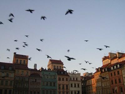 Варшава, декабрь 2009: юбилей, дискуссия и фестиваль